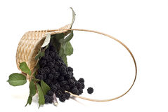 Blackberries XIX Stock Photos