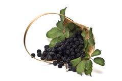 Blackberries XVI Stock Photo