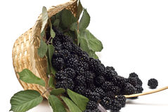 Blackberries XVIII Royalty Free Stock Photo
