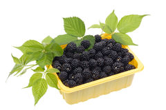 Blackberries in a yellow plastic container Royalty Free Stock Image