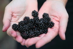Blackberries for you Royalty Free Stock Photos