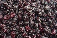Blackberry. Fruit blackberry Royalty Free Stock Image