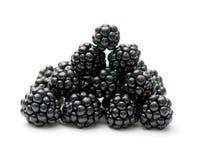 Free Blackberry Stock Photography - 11310342