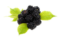 Blackberry. Insulated berries of ripe blackberry with green sheet Royalty Free Stock Photo