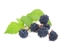 Blackberry. Branch of blackberry isolated on a white background Stock Photography