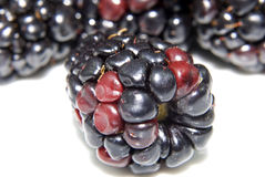Blackberry. Close-up of a single blackberry with some other blackberries in the background Royalty Free Stock Images