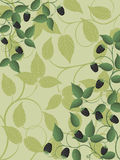 Blackberry. Floral background with a blackberry. Vector illustration royalty free illustration