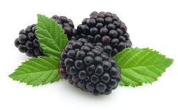 Blackberry Royalty Free Stock Photo