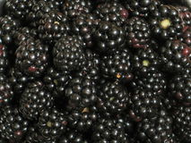 Blackberry Stock Image