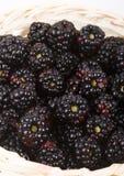 The blackberry Stock Photos