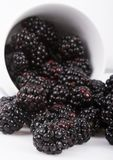 The blackberry Stock Photo