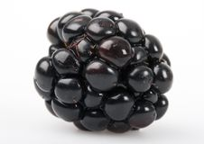 The blackberry. Is a widespread and well known shrub. A bramble fruit (Genus Rubus, Family Rosaceae) growing to 3 m (10 ft) and producing a soft-bodied fruit Stock Photography