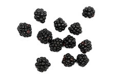 Blackberry. On a white background stock images