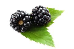 Blackberry,. Blackberry with leaves isolated on white stock photography