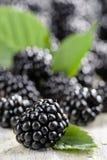 Blackberry Lizenzfreie Stockfotos