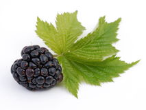 Blackberry. Fruit with green leaf Royalty Free Stock Photo