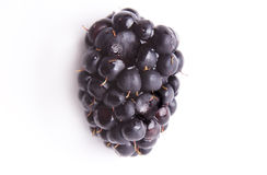 Blackberry Stock Photography