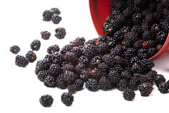 Blackberry. Closeup image of blackberry scattered from pail Royalty Free Stock Images