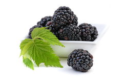 Blackberry. Or bramble on a white background Stock Image