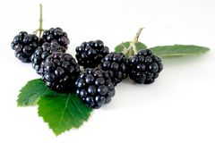 BLACKBERRY. On a white background Stock Image