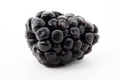 Blackberry Stock Photography