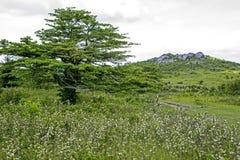 Blackberry arbustos na paisagem em Grayson Highlands imagens de stock royalty free