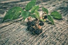 Blackberry auf die Oberseite einer Tabelle Stockbilder