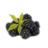 Blackberry avec des lames d'isolement sur le blanc Photographie stock libre de droits
