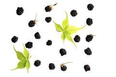 Blackberry bär på en vit bakgrund Arkivbilder