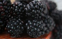 Blackberry bärmakro Royaltyfria Bilder