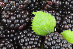 Blackberry Background. Fresh blackberry background image with green leaves Royalty Free Stock Images
