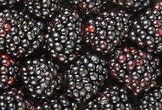 Blackberry background Stock Images