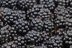 Blackberry background Stock Photography
