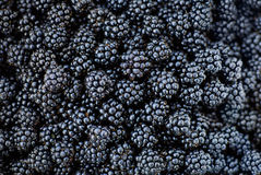 Blackberry background Royalty Free Stock Photography