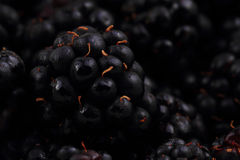 Blackberry background Royalty Free Stock Images