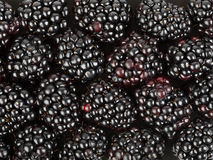 Blackberry background Royalty Free Stock Photo