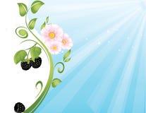 Blackberry bakgrund Royaltyfria Bilder