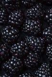 Blackberry bakgrund Closeup av nya björnbär på svart t Royaltyfria Foton