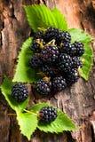 Blackberry on bark background. Ripe Blackberry on bark background Stock Photo