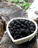 Blackberry basket. Little basket with fresh blackberries from the forest Royalty Free Stock Image