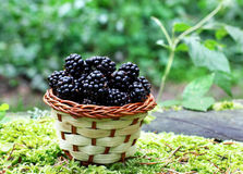 Blackberry Stock Photo