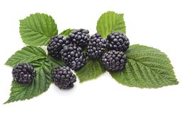 Blackberry berries on a green leaf. Royalty Free Stock Photos