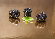 Blackberry berries on a mirror reflecting background. Royalty Free Stock Image