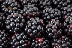 Blackberry berry Royalty Free Stock Images