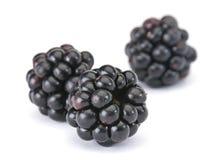 Blackberry berry Stock Photo