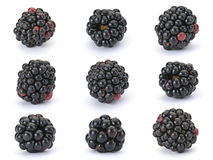 Blackberry berry Stock Images