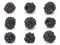 Blackberry berry Stock Images