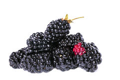 The blackberry berry. Is isolated on a white background Royalty Free Stock Photo