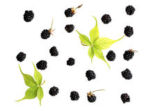 Blackberry berry on a white background Stock Images