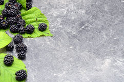 BlackBerry on black background. Close up photo Stock Image